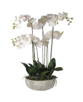 Extra Large 97cm White Orchid Phalaenopsis Plants in Stone-look Bowl
